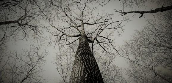 Tradiții de iarnă cu rădăcini dacice