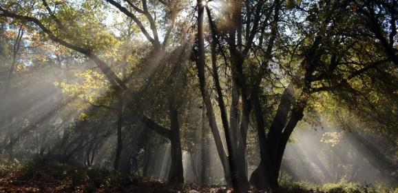 Sfântul Bonifatie sau drumul scurt de la promiscuitate la sfințenie