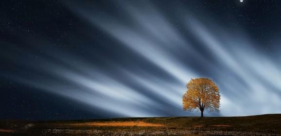 Rădăcinile care tind omul către Cer